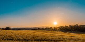 Środki ochrony roślin zapewniają zdrowe i obfite plony